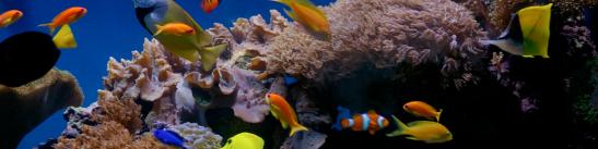 5reef fish