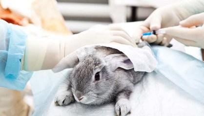 animaltesting2