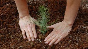 Building-peace-through-environmental-conservation