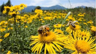 bees poll.jpg