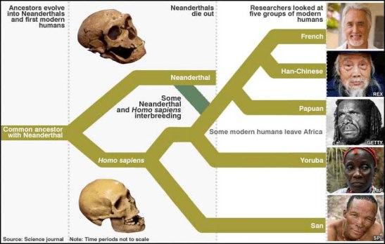 neanderthal510a