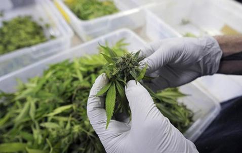 normlblog-marijuanaresearch