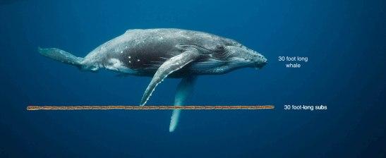 whales-underwater-darrenjew-whale-02a.jpg
